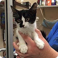 Adopt A Pet :: Charleze - Gilbert, AZ