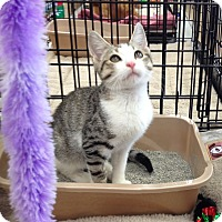 Adopt A Pet :: Merlin - Horsham, PA