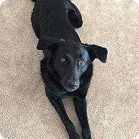 Adopt A Pet :: George - Bardonia, NY