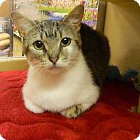 Adopt A Pet :: Titania - The Colony, TX