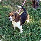 Adopt A Pet :: Dave