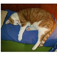 Adopt A Pet :: Sunny D - Ortonville, MI