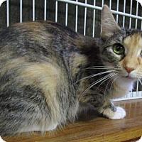 Adopt A Pet :: Rainbow - Witter, AR