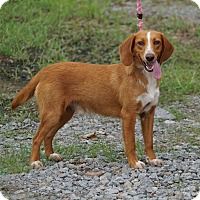 Adopt A Pet :: Arnie in CT - Manchester, CT