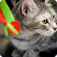 Adopt A Pet :: Misty - Boise, ID