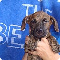 Adopt A Pet :: Citrine - Oviedo, FL