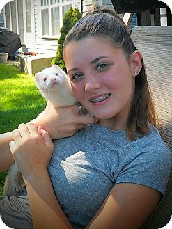 Ferret for adoption in Red Bank, New Jersey - Whitey