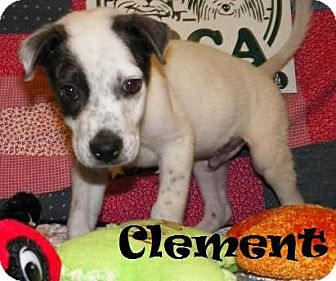 Labrador Retriever/Feist Mix Puppy for adoption in Ringwood, New Jersey - Clement