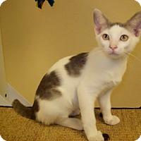 Adopt A Pet :: Oscar - Georgetown, TX