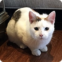 Adopt A Pet :: Daisy - Harrison, NY