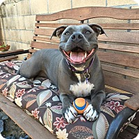 Pit Bull Terrier Mix Dog for adoption in La Habra, California - Lana