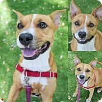 Adopt A Pet :: Tia - Clearwater, FL