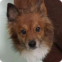 Adopt A Pet :: Foxx - Akron, OH