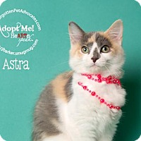 Adopt A Pet :: Astra - Pearland, TX
