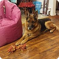 Adopt A Pet :: Lady - Newport, KY