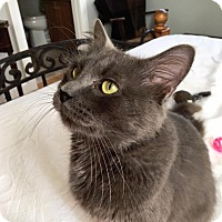 Adopt A Pet :: Spartan - Apex, NC