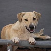 Adopt A Pet :: Sugar - Buchanan Dam, TX