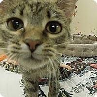 Adopt A Pet :: Tabitha - Medina, OH