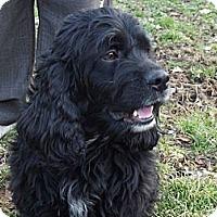 Adopt A Pet :: Mister - Hollis, ME