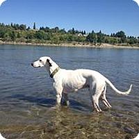 Adopt A Pet :: Archer - Saskatoon, SK