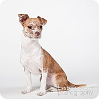 Adopt A Pet :: Lilah - Los Angeles, CA