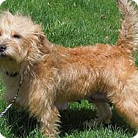 Adopt A Pet :: Izzy Mae - Washington, PA