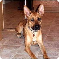 Adopt A Pet :: Roxi - Scottsdale, AZ