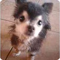 Adopt A Pet :: Rufus - Phoenix, AZ