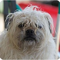 Adopt A Pet :: Toto - Providence, RI