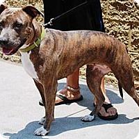 Adopt A Pet :: Carmen - Gilbert, AZ