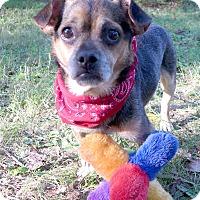 Adopt A Pet :: Gretzky - Mocksville, NC