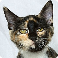 Adopt A Pet :: Xaria V - Sacramento, CA
