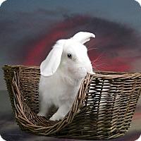 Adopt A Pet :: Rio - Marietta, GA
