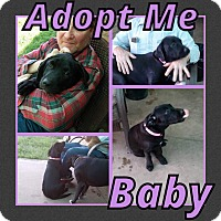 Adopt A Pet :: Baby Girl - Cheney, KS