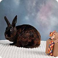 Adopt A Pet :: Bindi - Marietta, GA