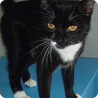 Adopt A Pet :: Brenda - Hamburg, NY