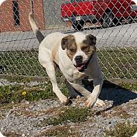Adopt A Pet :: Blizzard - Lewisburg, TN