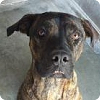 Adopt A Pet :: Leila - Seattle, WA