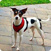 Adopt A Pet :: Sonny (FL) - Gainesville, FL