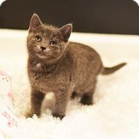 Adopt A Pet :: Bonnie - Xenia, OH