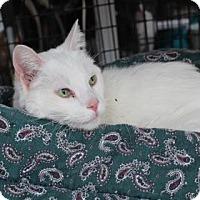 Adopt A Pet :: Beebo - Tucson, AZ