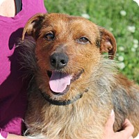 Adopt A Pet :: Leon - Mt. Prospect, IL
