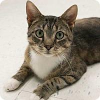 Adopt A Pet :: Buttons - Toronto, ON