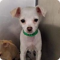 Adopt A Pet :: Candace - Miami, FL