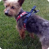 Adopt A Pet :: Clancy - Mt. Prospect, IL