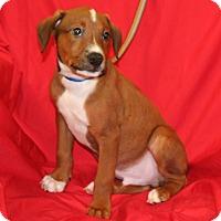 Adopt A Pet :: Ranger - Umatilla, FL