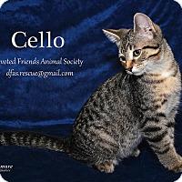 Adopt A Pet :: Cello - Ortonville, MI
