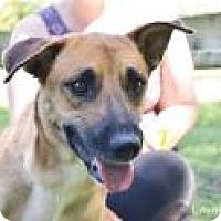 Adopt A Pet :: Kaleesi - Stillwater, OK