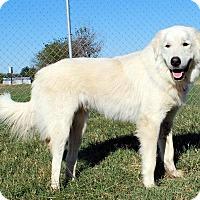 Adopt A Pet :: Charlie - Pryor, OK