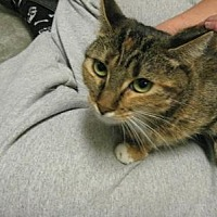 Adopt A Pet :: Padme - Logan, UT